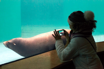 The child makes the photo fur seal on  smartphone