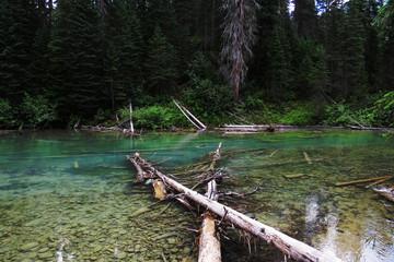 A crystal clear river near the Emerald Lake.  Banff, Alberta, Canada.