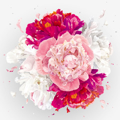 Pink, red and white peonies composition