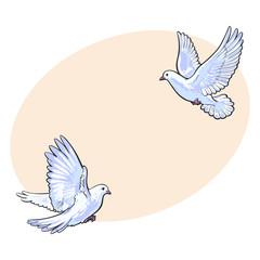 Two free flying white doves, sketch vector illustration isolated on background with place for text. Realistic hand drawn couple of white doves, pigeons flapping wings, symbol of love and romance