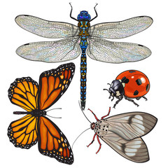 Set of insects like dragonfly, butterfly, ladybird and moth, sketch style vector illustration isolated on white background. Colorful realistic hand drawing of dragonfly, butterfly, ladybug and moth
