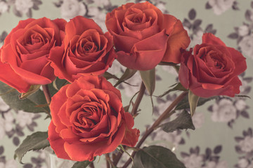 Gorgeous roses for holidays.
