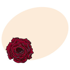 Deep red, ruby rose bud, top view sketch style vector illustration isolated on background with place for text. Realistic hand drawing of open red rose flower, decoration element