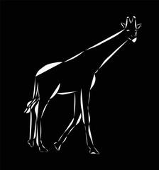 Schematic logo icon of running african giraffe on the black background.
