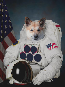 Dog astronaut. Flag of the United States in background. Elements of this image furnished by NASA.