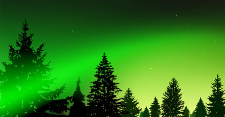 Silhouette of coniferous trees on the background of colorful sky.  Night. Northern lights. Green and yellow tones.