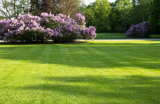 big, green lawn in the spring park