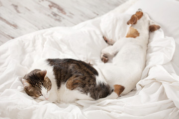 Sleeping pets on bed