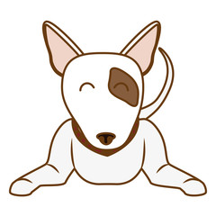 bull terrier dog icon over white background. colorful design. vector illustration
