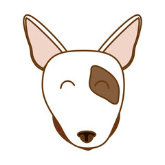 bull terrier dog face icon over white background. colorful design. vector illustration