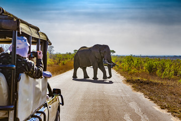 Fotobehang Zuid Afrika South Africa. Safari in Kruger National Park - African Elephants (Loxodonta africana)