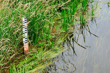 Water level scale stock standing in high grass at the edge of a river