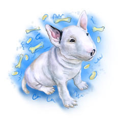 Watercolor portrait of white English Bull terrier, the white cavalier breed dog puppy  isolated on blue background with bones. Hand drawn realistic sweet pet. Greeting card design. Clip art. Add text