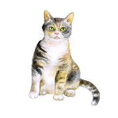 Watercolor portrait of rare exotic American wirehair cat isolated on white background. Hand drawn detailed sweet home pet. Bright colors, realistic look. Greeting card design. Clip art. Add your text