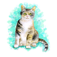 Watercolor portrait of rare exotic American wirehair cat isolated on turquoise background. Hand drawn detailed sweet home pet. Bright colors, realistic look. Greeting card design. Clip art. Add text