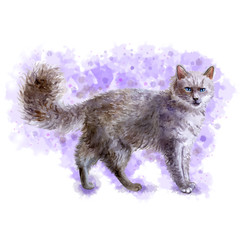 Watercolor portrait of LaPerm curly hair cat isolated on violet background. Hand drawn detailed sweet home pet. Bright colors, realistic look. Greeting card design. Clip art. Add your text
