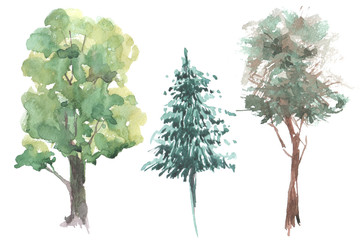 wild trees watercolor set illustration