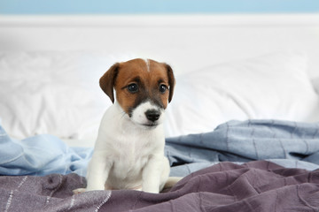 Cute funny puppy on bed at home