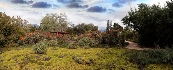 Panoramic desert garden path
