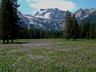 Alpine Meadow and Sawtooth Mountains Near Stanley, Idaho 9 Wall mural
