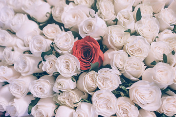 bouquet of white roses and one red closeup background