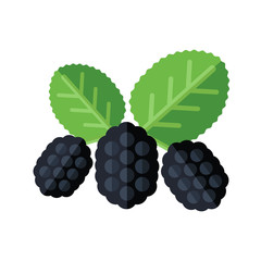 Mulberry berries and leaves vector illustration. Superfood morus