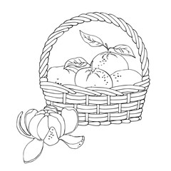 vector monochrome contour illustration of tangerine fruit mandarin in basket