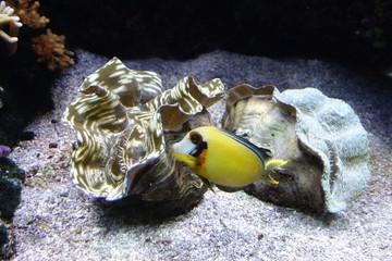 pesce e conchiglie
