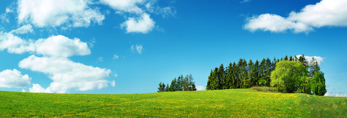 Wall Mural - Green field with yellow dandelions and blue sky. Panoramic view to grass and flowers on the hill on sunny spring day