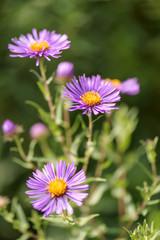 beautiful summer flower background