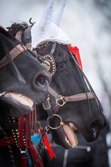 Horse and red ribbons