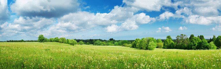 Green field with white dandelions and blue sky. Panoramic view to grass and flowers on the hill on sunny spring day Wall mural