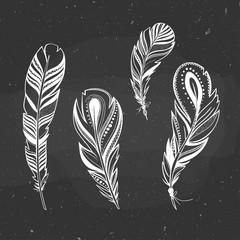 set of ornamental birds feathers on a chalkboard, vector illustration, boho style