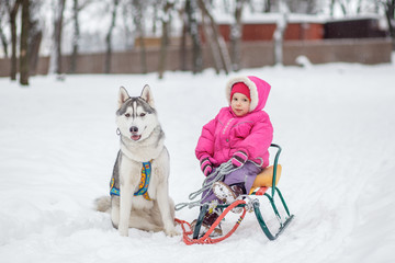 Adorable little girl having a cuddle with husky sled dog