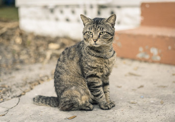Tabby cat sitting on the cement street.