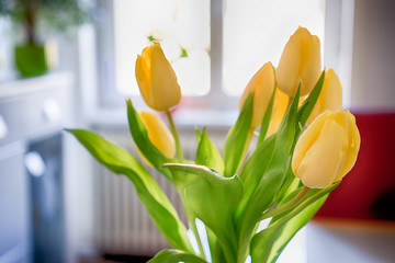 yellow tulip