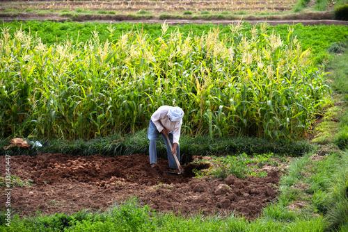 Self-sufficient labor-intensive farming in Morocco