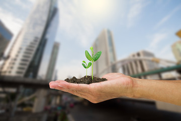 Man hand holding young green sprout isolated on blurred city background