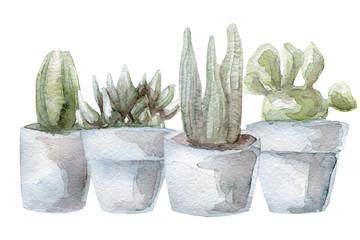 Watercolor cactus and succulent set