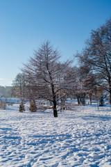 Zimowa sceneria