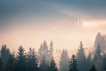 Door stickers Morning with fog Wide panorama of foggy mountain range in sunrise beams. Morning sun rays through the fog over mountain slopes, covered with spruce forest..