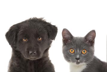 black puppy and kitten gray,