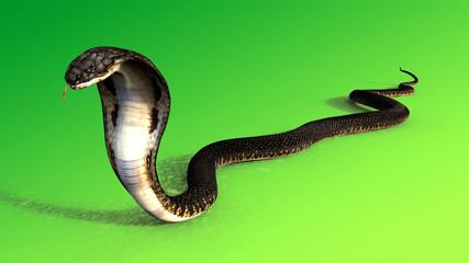 3d King Cobra The world's longest venomous snake isolated on green background, King cobra snake 3d illustration, King cobra snake 3d Rendering