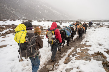 Trekkers, sherpas and yak shepherds in the Himalayan Regions during stnowstorm