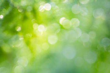 .Natural Bokeh,blurred bokeh.