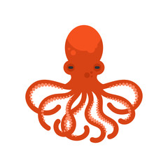 Vector flat style illustration of octopus.