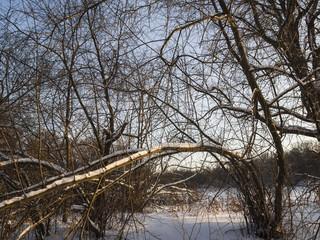 trees in winter