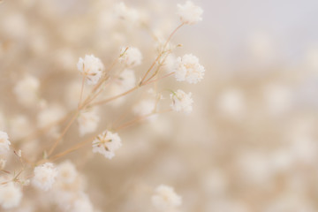 Burred flower background