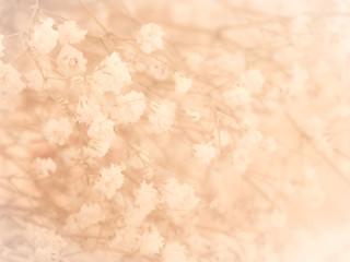 Little white flower background