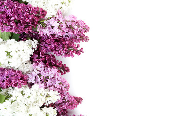 Photo sur Plexiglas Lilac Blooming lilac flowers on a white background